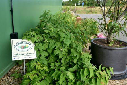 Ocenění přírodní zahrada